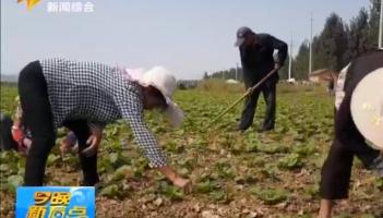 峄城:流转土地种蔬菜 结构调整促增收