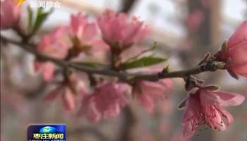 战疫情 抓春耕——市中区不误农时积极抓好春季农业生产