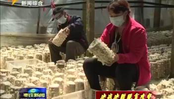 山亭:白玉木耳助农致富增收