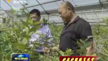 山亭:果树科技特派员 助力蓝莓丰产