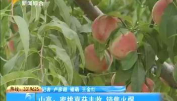 蜜桃喜获丰收 销售火爆