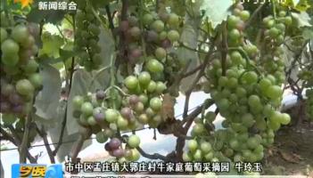 《走向我们的小康生活》小小葡萄树种出致富果