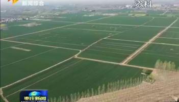 滕州:发展特色产业 助推乡村振兴