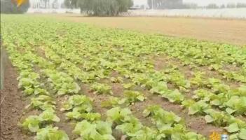 全面实施乡村振兴战略 加快推进我市农业农村现代化