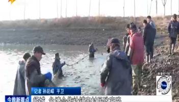 峄城 鱼塘合作社铺出村民致富路