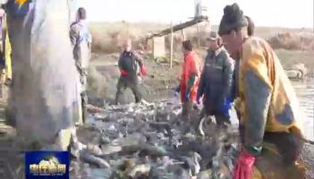 峄城:渔业合作社为塌陷地农民铺就致富路